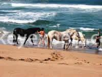 horse safari kusadasi