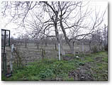 Parcel of land for sale with many fruit trees