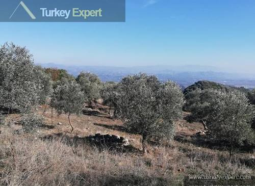 2.6 hectares agricultural land for sale in Turkey, containing 1000 olive trees, generates income