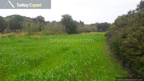 Olive grove for sale on Cesme Peninsula, Izmir