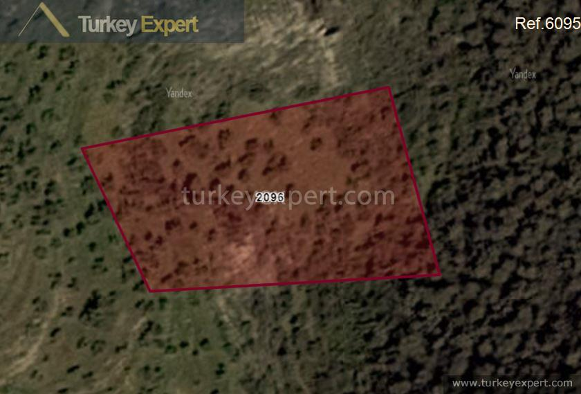 1olive grove for sale in1
