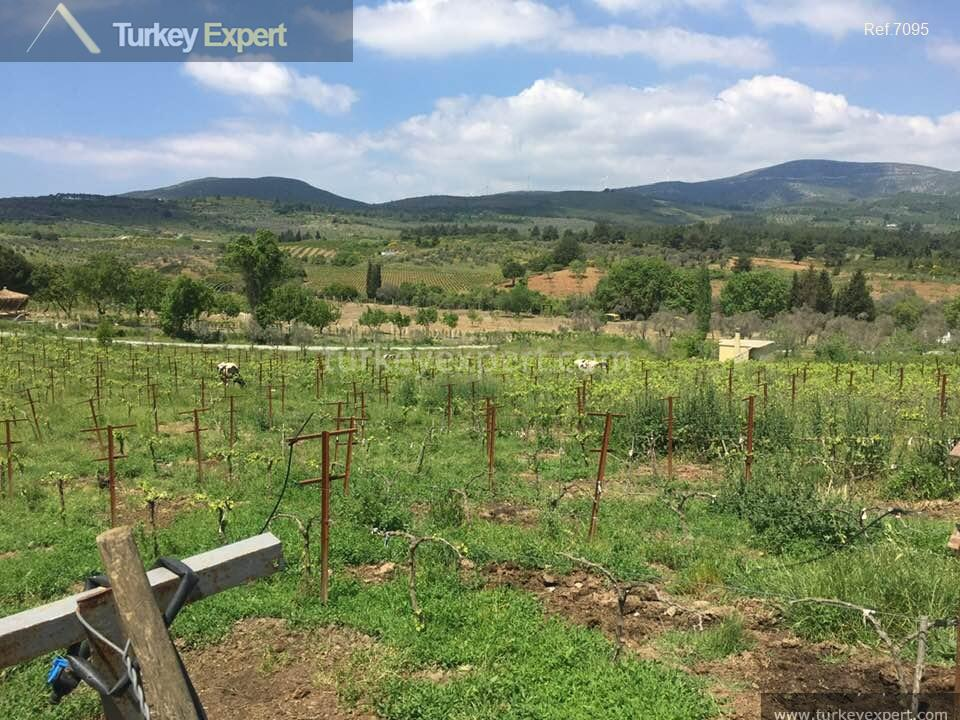 farm for sale in yenikoy1