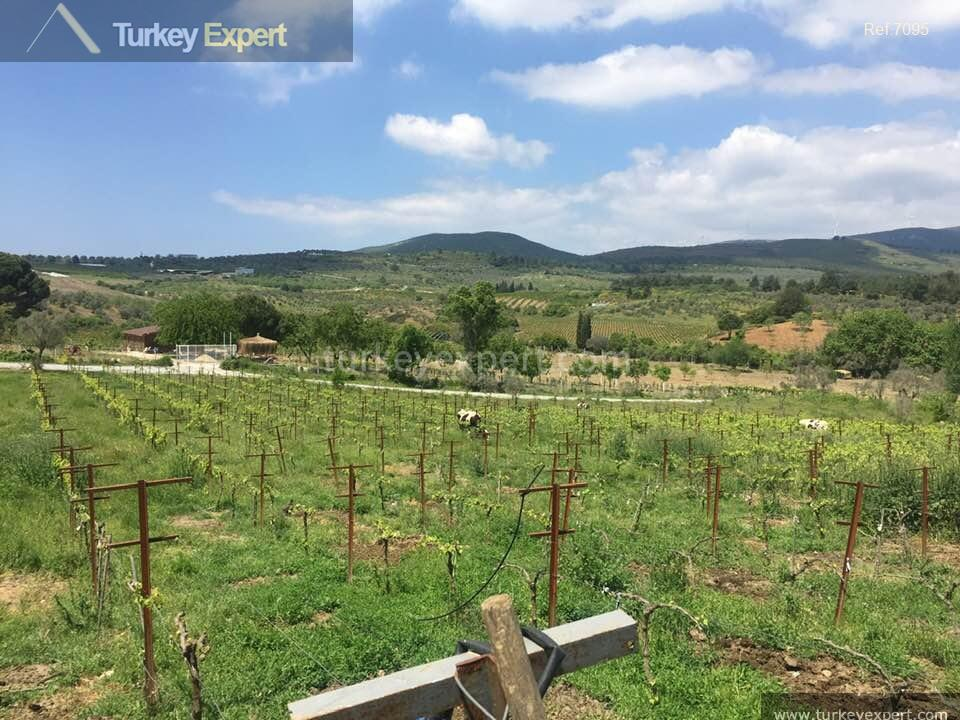 farm for sale in yenikoy7
